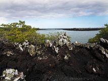 Stuffed lava on island Islote Tintoreras commemorates the moonland, Galapagos, Ecuador. One Stuffed lava on island Islote Tintoreras commemorates the moonland stock photo