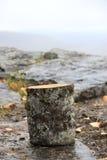 One stump Stock Photo