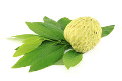 One Sugar Apple and leaves Royalty Free Stock Photos