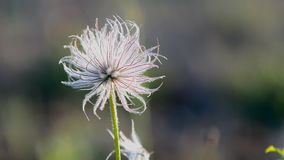 One Summer wildflowers moving in the wind stock video footage