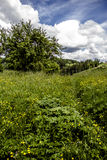 One sunny day... Sunny day with blue sky and green meadow Stock Images
