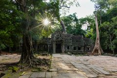 Temple in jungle - Ta Prohm temple. This is one sunset view of Ta Prohm temple. The picture was taken near the main entrance of this temple Stock Photography