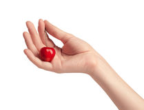 One sweet cherries in a hand. Handful of sweet cherries in a hand Royalty Free Stock Photos