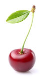 One sweet cherry royalty free stock images