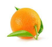 One tangerine Royalty Free Stock Photo