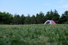 One tent on the vast grass land. Blue sky, green trees around one little tent with someone inside Royalty Free Stock Photo