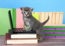 Surprised grey kitten on a miniature laptop computer royalty free stock photo