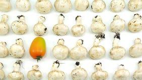 Free One Tomato Between Mushrooms Royalty Free Stock Image - 36937576