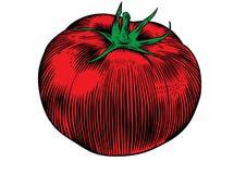 One  tomato Stock Photo