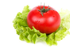One tomato on salad leaf on white Royalty Free Stock Images