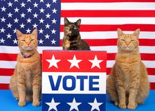 Patriotic election day cats at podium with vote sign. One tortoiseshell cat sitting behind a podium with VOTE sign on the front, orange tabby cat sitting on each royalty free stock photo