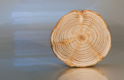One transverse unpolished pine saw cut stands on light glossy su Royalty Free Stock Photos