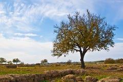 One tree. Single tree in full blue sky background Royalty Free Stock Photo