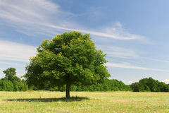 One tree Royalty Free Stock Photography