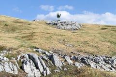 One tree Royalty Free Stock Image
