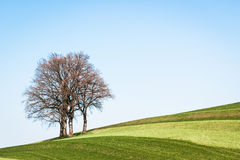 One tree Royalty Free Stock Images