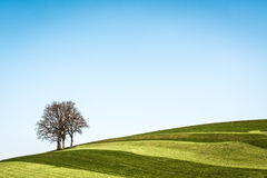One tree Royalty Free Stock Image