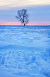 One tree against winter sunrise. One tree surrounded by snow drifts against a sunrise Royalty Free Stock Image