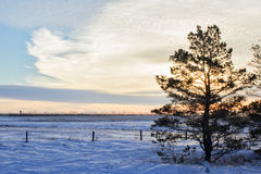 One tree against winter sunrise. One tree surrounded by snow drifts against a sunrise Royalty Free Stock Photography