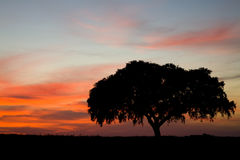 One tree - Alentejo Portu Stock Photography