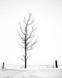 One tree along fence Stock Photos