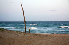 One tree beach. A postcard-style beach showing a dead tree on the shores of Mozambique Royalty Free Stock Photography