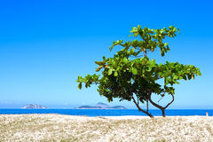 One tree on a beach Royalty Free Stock Image