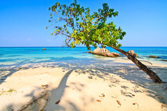 One tree and beautiful seascape, Thailand Royalty Free Stock Photography