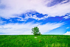 One tree in blue sky Stock Images
