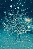 One Tree Covered With Snow In A Cold Winter Night Royalty Free Stock Images