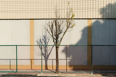 One tree deing alone in metal net. With shadow on the wall Stock Image
