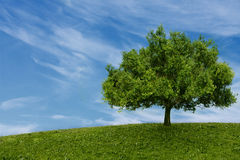 One tree in  field Stock Image
