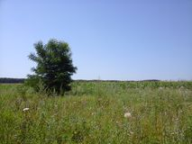One tree. In the field Royalty Free Stock Photography