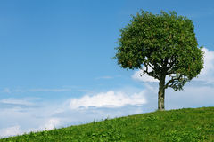 One tree in field stock images