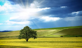 Sunny panorama of nature Royalty Free Stock Image
