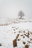 One tree on a foggy winter field. stock photos
