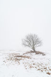 One tree on a foggy winter field. Royalty Free Stock Photo