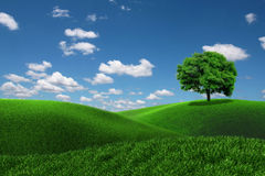 One tree on a grass field Stock Photos