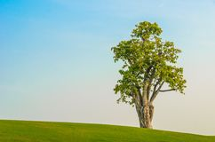 One tree on grass field in blue sky Royalty Free Stock Photos