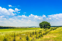 One tree in the grass field Royalty Free Stock Photos
