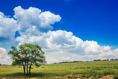 One tree in the grass field Stock Photography