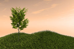 One Tree on a Grass Field Hills and Open Sky stock photo