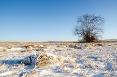 One tree and grass on an winter snow field with hill Royalty Free Stock Photography