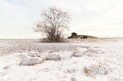 One tree and grass on an winter snow field with hill Royalty Free Stock Image