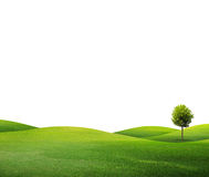 One tree on green field Royalty Free Stock Photography