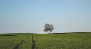One Tree on a Green Grass Land Stock Photo