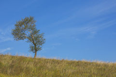 One tree growing in grassland Royalty Free Stock Image