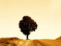 One tree hill. Photo of one lone tree standing beside a roadway Royalty Free Stock Photo