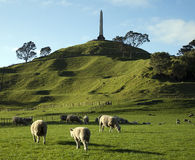 One Tree Hill with sheep Royalty Free Stock Images