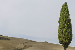 One tree on hilly landscape Stock Photography